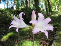 На его просторах растут такие вот диковинные цветы