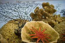 Обязательный сувенир с острова — морская губка, которую здесь добывают и продают.
