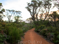 Bibbulmun Track (a long distance walk trail in Western Australia, 1,003.1 kilometres long)