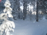 В тайге идёт снег.