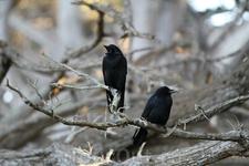 Вороны - местные обитатели заповедника.