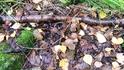 финские грибочки