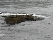На выступающих камнях отдыхают тюлени.