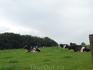 Беннерт.Сознательно фотографировала просторы,гуляющих,выхоленных коров и прочую живность на природе.
