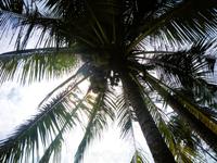 пальма над головой на острове Ко Куд - единственное что беспокоит, чтобы кокос не упал на голову