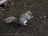В парке много белок, они не боятся людей, берут корм из рук.