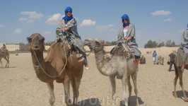 Прогулка на верблюдах во время сафари по Сахаре.