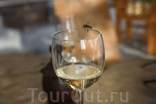 Ледяное белое вино, один из символов Фогу. Самый сельскохозяйственный остров Кабо-Верде - он и самый вкусный.
