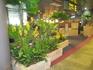 аэропорт,бесплатный wi-fi... и везде цветы