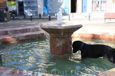 Когда мы приехали в старую часть города,попали на небольшую площадь,где был фонтан,а в нем бегала за кем-то вот эта забавная собака)))