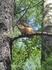белочка в Каменных палатках, потом еще видели в Денропарке...подкормили, шустрые они)))) столько визгу было и восторга от младшего!!!))))
