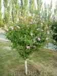 Даже деревья цветут!