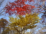 Желтое и красное - осенний лес Чеджу
