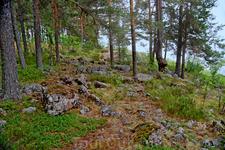 Среди камней растёт вереск и костяника.