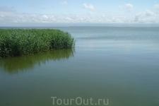 C другой стороны косы , Куршский залив . Там все тихо, никаких волн, плавают лебеди, утки и чомги.