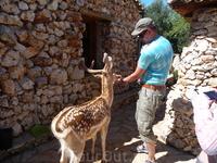 ручные олени парка Аскос