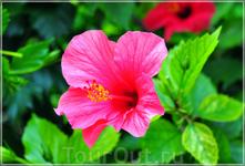 милый цветочек!