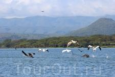 Птицы над озером Найваша