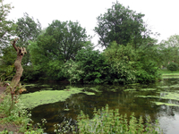 В парке на удивление тихо, море зелени и по газонам бегают белки, выпрашивая вкусненькое.