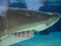 Aquarium of the Pacific! Живая акула!