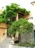 Собственно дом владельца и мандариновое дерево
