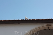 кипрская птичка