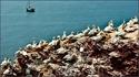 Хельголанд это рай не только для птичек но и для яхтсменов. В мае, когда отмечается неделя Северного моря, сюда собираются на регату лучшие спортсмены ...