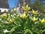 майские цветы в Порвоо