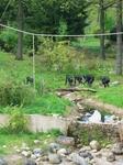 обезьяны свободно перемещаются на огромной территории и совершенно не чувствуют, что они в неволе