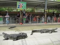 шоу крокодилов в зоопарке