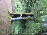 Пустое дерево