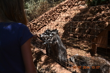 Зоопарк в каменном заповеднике Askos