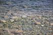 Первый пляж, чистейшая вода.