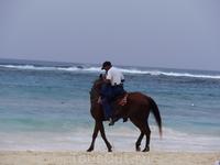 полицейский на коне