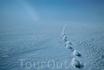 """""""Что станет с Арктикой, если глобальное потепление продолжится и мир льда вместе со всеми его обитателями исчезнет навсегда?"""" Автор: Пол Никлен (Paul ..."""