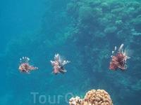 Мир коралла... опасная троица...