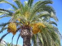 Это так цветет пальма?