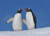 Антарктида как будто создана для романтиков.