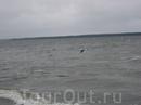 Приморск в Ленинградской области