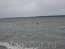 Финский залив во всей своей красе.
