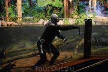 Вот так убирают аквариумы.