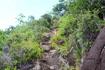 По одной из тропинок заповедника Сейшельский Морн отправляемся на пляж Анс-Мажор