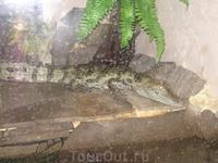 дендрозоопарк в Алуште.очень хилый аллигатор