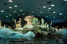 У пингвинов в Лоро-парке огромный крытый вольер, где им построили свою маленькую Антарктиду, там даже снег сыплется. Я думаю, пингвны и не догадываются, что это не настоящая Антарктида. Планета пингви