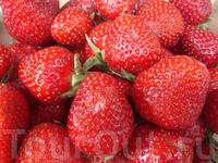 сладка-ягода