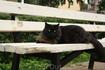 Зеленогрские коты...такие пушистые.