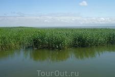 Куршский залив в отличие от моря всегда спокоен.