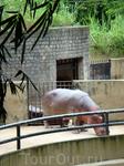 Одинокий бегемот