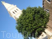 Круглое деревце