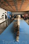 После китового сафари посетили Китовый центр, самый крупный в Норвегии.  В музее представлен 15 метровый скелет 40-ка летнего кашалота, погибшего при столкновении с рыбацким судном.